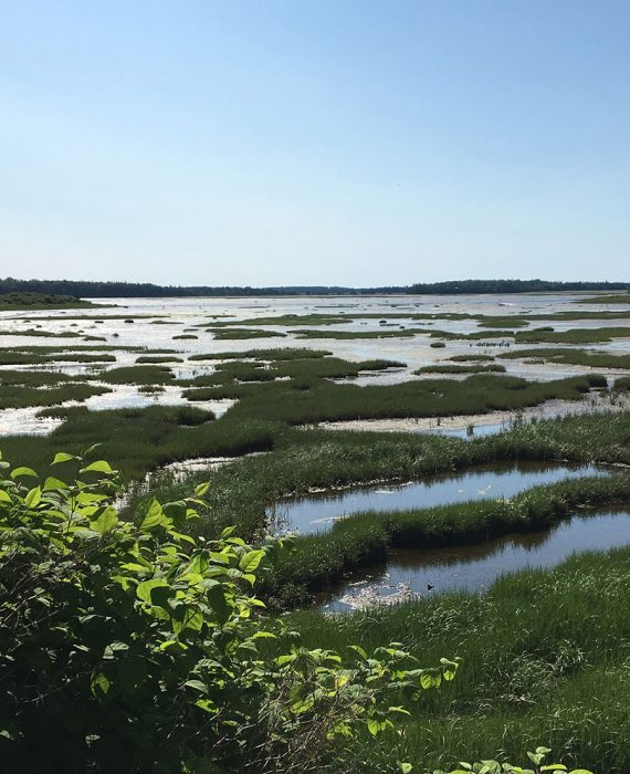 Chezzetcook salt marsh, Nova Scotia.
